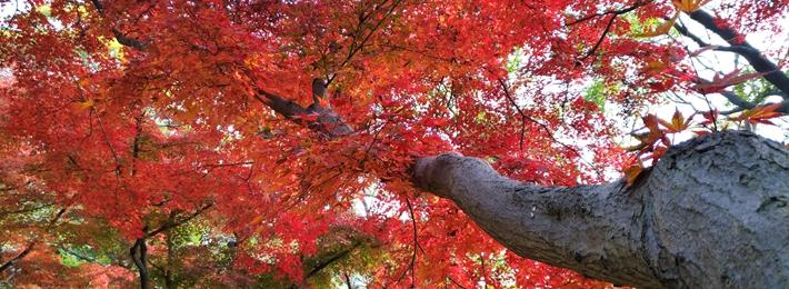 在青岛遇见最美的秋天
