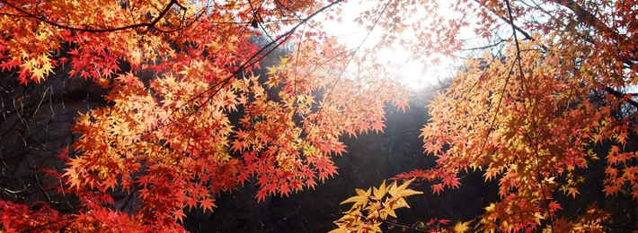 北九水赏红叶
